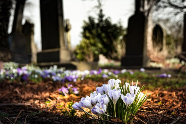 graveyard-church-crocus-cemetery-161280.jpeg